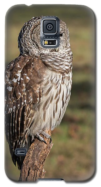 Stately Barred Owl Galaxy S5 Case