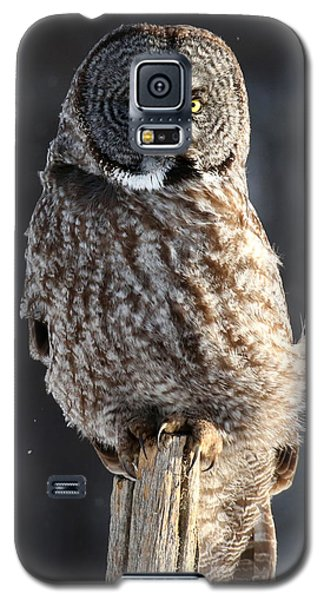 Steadfast In The Wind Galaxy S5 Case