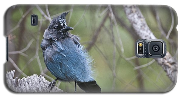 Galaxy S5 Case featuring the photograph Stellar's Jay by Gary Lengyel