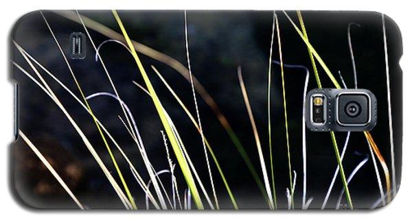 Stems Galaxy S5 Case