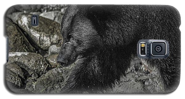 Stepping Into The Creek Black Bear Galaxy S5 Case