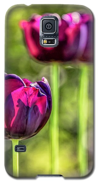Stepping Out Galaxy S5 Case by Jean OKeeffe Macro Abundance Art