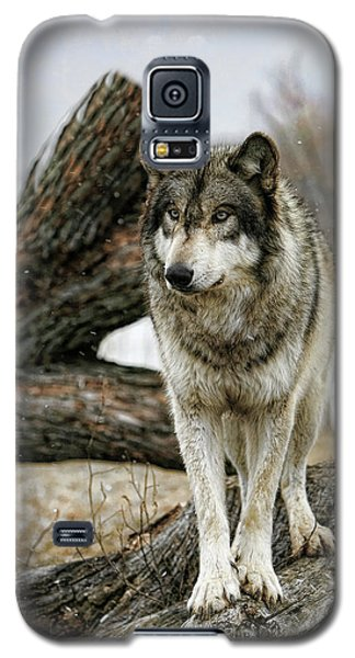 Still Wolf Galaxy S5 Case