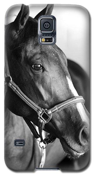 Horse And Stillness Galaxy S5 Case