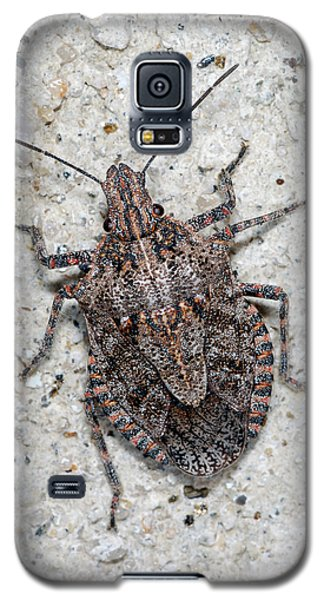 Galaxy S5 Case featuring the photograph Stink Bug by Breck Bartholomew