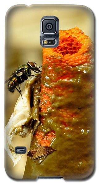Tip Of Stinkhorn Mushroom With Fly Galaxy S5 Case