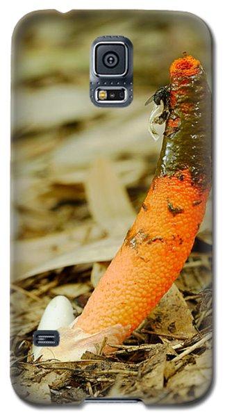 Stinkhorn Mushroom With Fly Galaxy S5 Case
