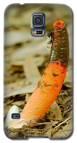 Stinkhorn Mushroom With Fly Galaxy S5 Case