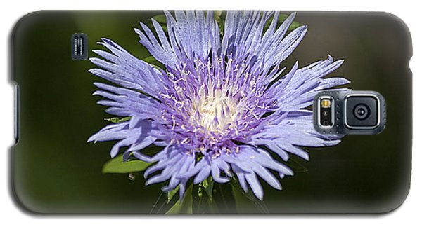 Galaxy S5 Case featuring the photograph Stokes Aster 20120703_129a by Tina Hopkins