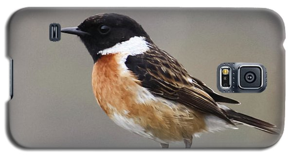 Stonechat Galaxy S5 Case by Terri Waters