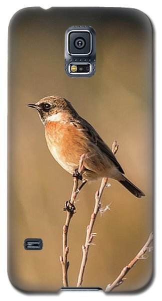 Stonechat Galaxy S5 Case