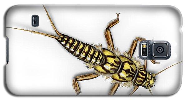 Stonefly Larva Nymph Plecoptera Perla Marginata - Steinflue -  Galaxy S5 Case