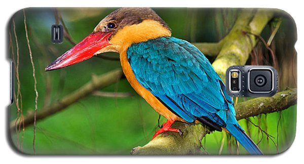 Stork-billed Kingfisher Galaxy S5 Case by Louise Heusinkveld