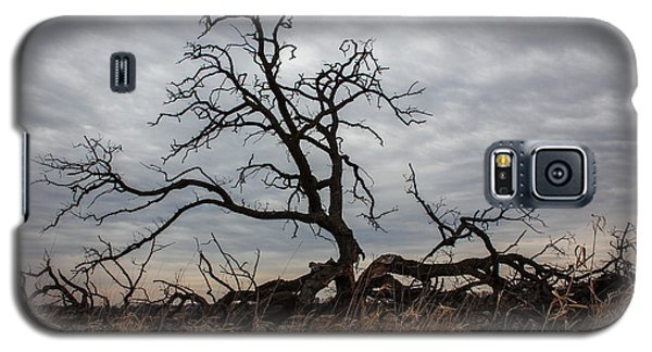 Storms Make Trees Take Deeper Roots  Galaxy S5 Case
