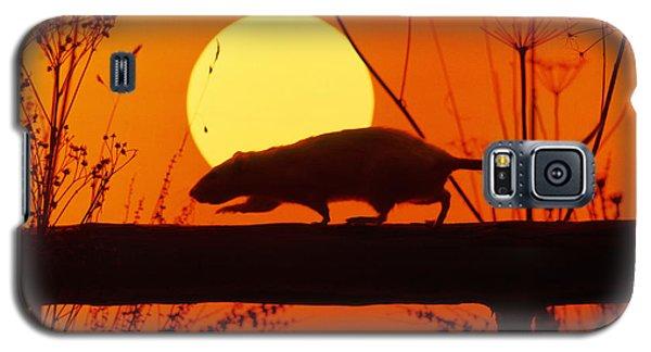 Stranglers Rattus Norvegicus Rat Galaxy S5 Case