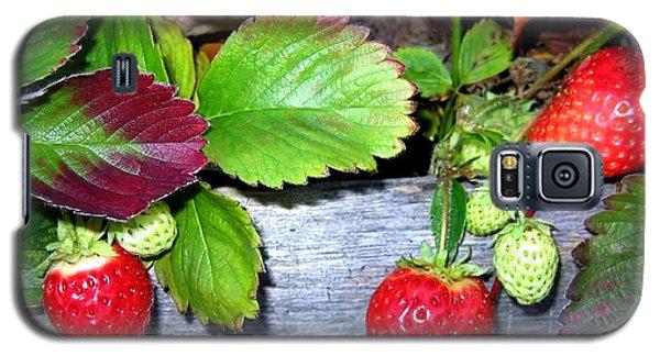 Strawberries Galaxy S5 Case