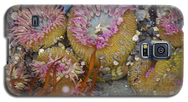 Strawberry Anemonies Galaxy S5 Case