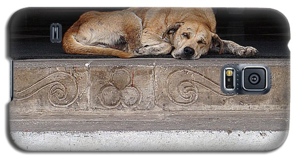 Street Dog Sleeping On Steps Galaxy S5 Case