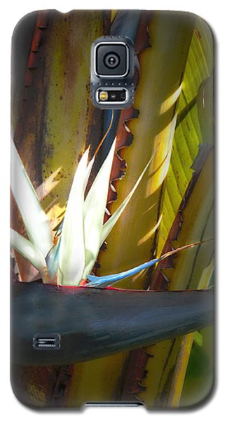 Galaxy S5 Case featuring the photograph Strelitzia Nicolai by John Bartosik