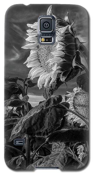 Strength Of A Sunflower Galaxy S5 Case