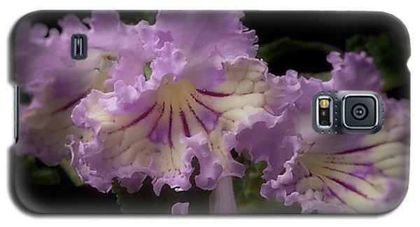 Streptocarpus 'renia' Galaxy S5 Case