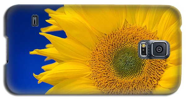 Striking Sunflowers Galaxy S5 Case