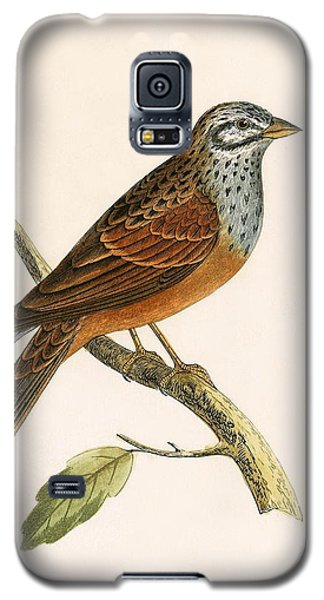 Striolated Bunting Galaxy S5 Case