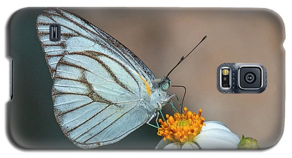 Striped Albatross Butterfly Dthn0209 Galaxy S5 Case