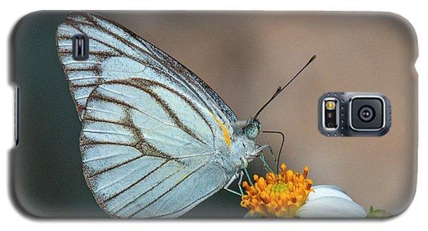 Striped Albatross Butterfly Dthn0209 Galaxy S5 Case