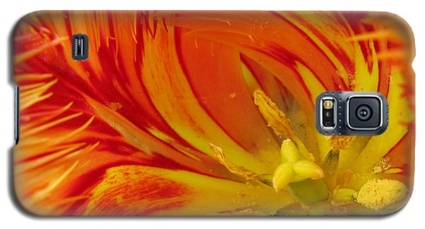 Striped Parrot Tulips. Olympic Flame Galaxy S5 Case by Ausra Huntington nee Paulauskaite