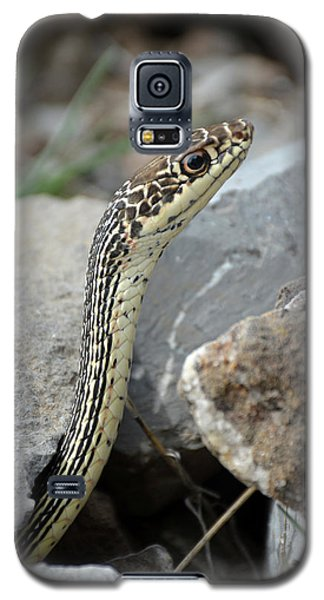 Striped Whipsnake, Masticophis Taeniatus Galaxy S5 Case
