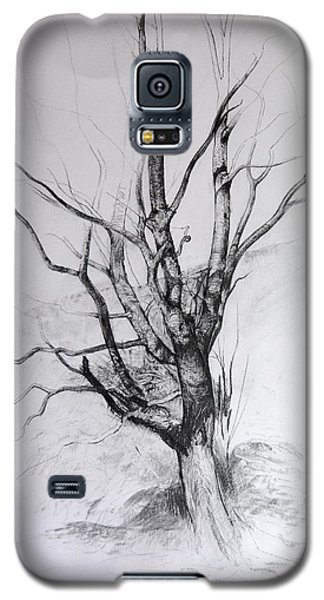 Study Of A Tree Galaxy S5 Case by Harry Robertson