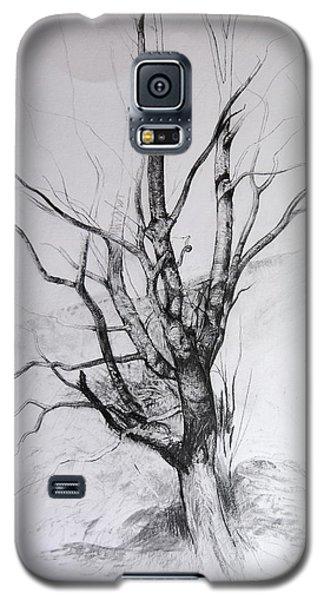 Study Of A Tree Galaxy S5 Case
