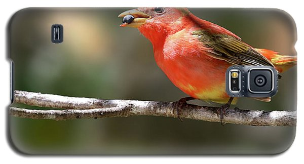 Stuffed Summer Tanager Galaxy S5 Case