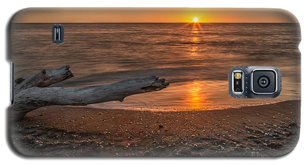Stump Sunset Galaxy S5 Case