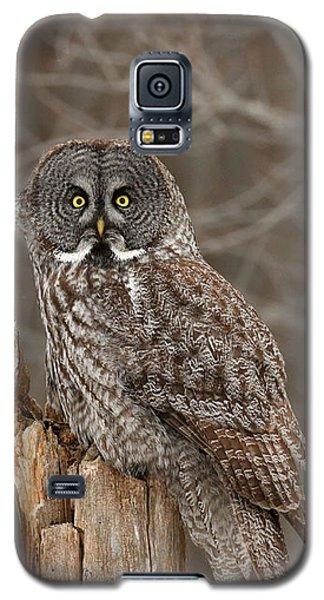 Stumped Galaxy S5 Case