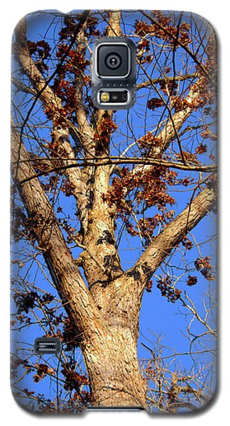 Stunning Tree Galaxy S5 Case