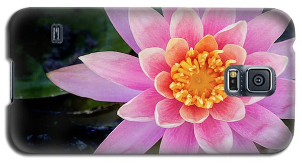 Stunning Water Lily Galaxy S5 Case
