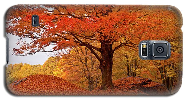 Sturdy Maple In Autumn Orange Galaxy S5 Case