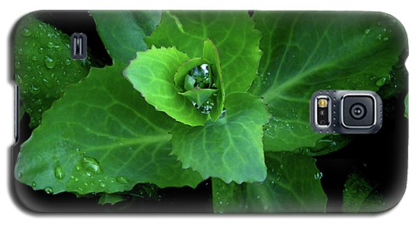 Succulent After The Rain  Galaxy S5 Case