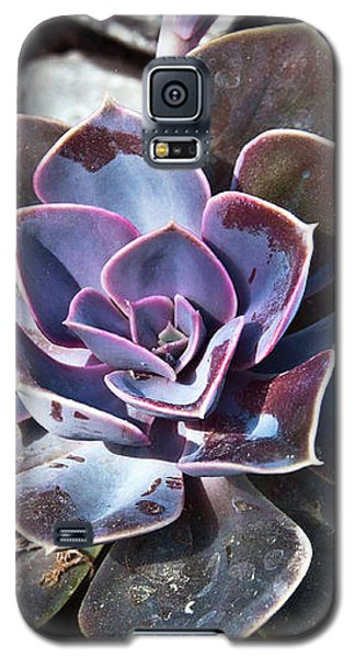 Succulent Plant Poetry Galaxy S5 Case