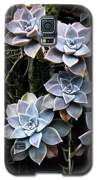 Galaxy S5 Case featuring the photograph Succulents Graptopetalum Paraguayense     by Catherine Lau