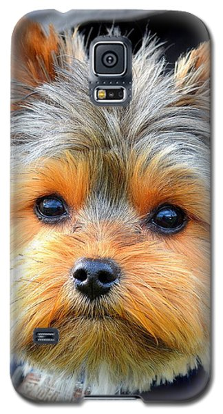 Galaxy S5 Case featuring the photograph Such A Face by Barbara Dudley