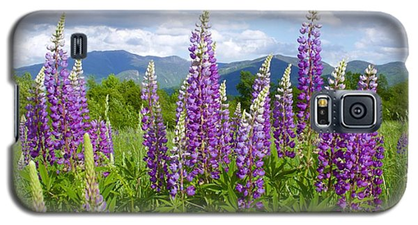 Sugar Hill Lupines Galaxy S5 Case by Alice Mainville