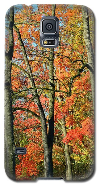 Galaxy S5 Case featuring the photograph Sugar Maple Brilliance by Ray Mathis