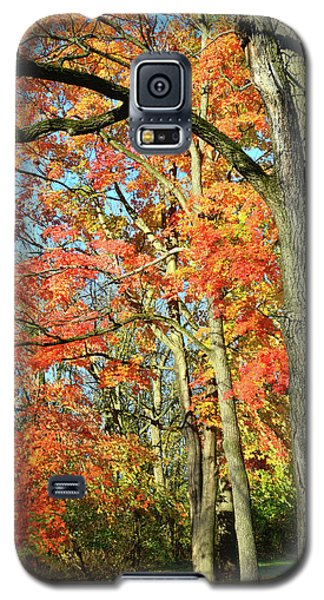 Galaxy S5 Case featuring the photograph Sugar Maple Stand by Ray Mathis