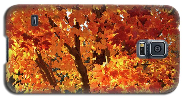 Galaxy S5 Case featuring the photograph Sugar Maple Sunset by Ray Mathis