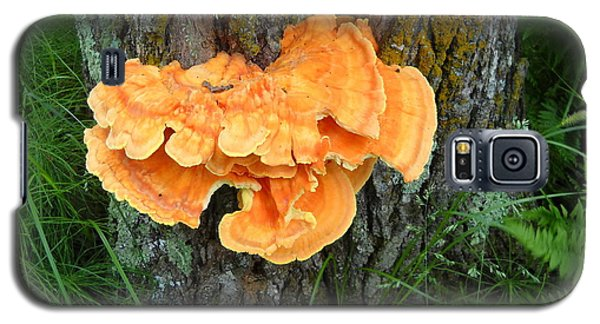 Sulfur Shelf Fungus On A Tree Galaxy S5 Case