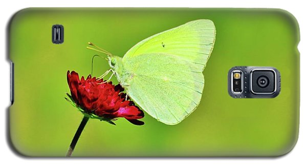 Sulphur Butterfly On Knautia Galaxy S5 Case