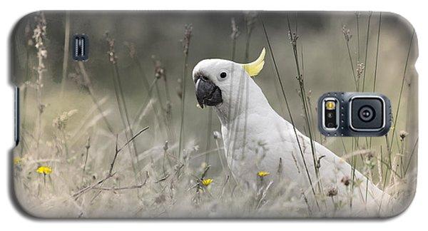 Sulphur Crested Cockatoo Galaxy S5 Case